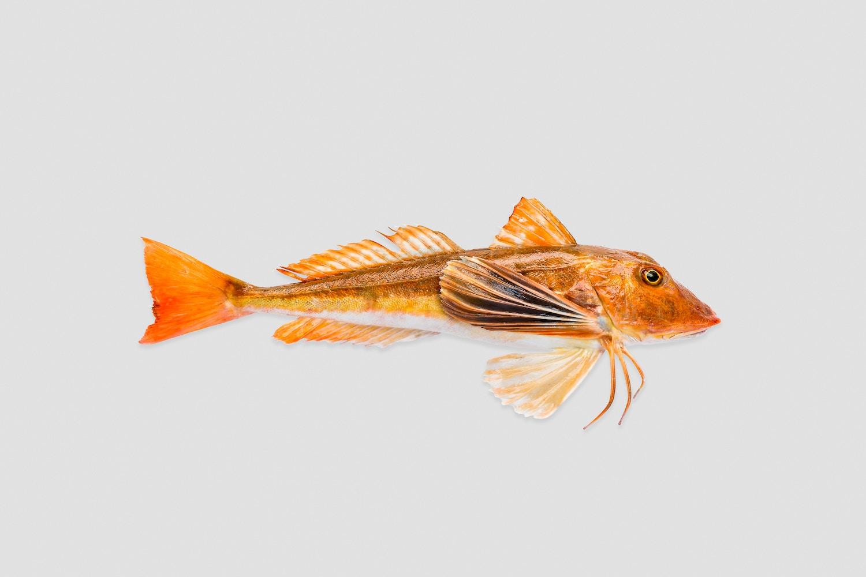 Prins Premium Seafood